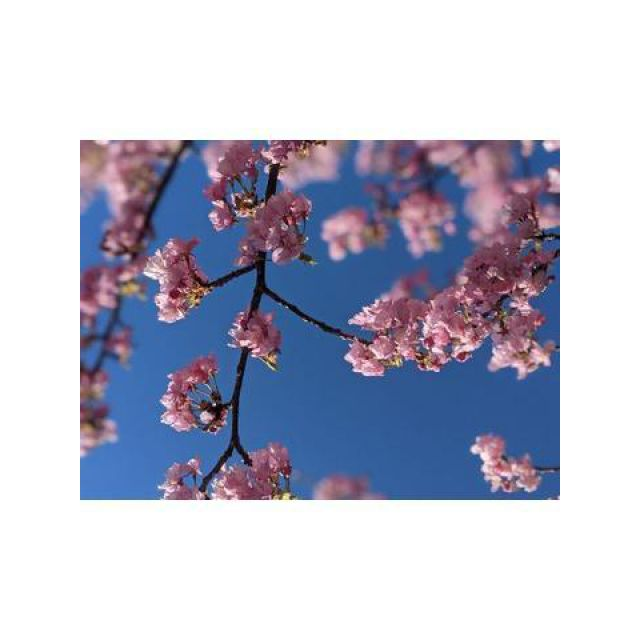 【千葉風俗】栄町ソープランド アラカルト【-A La Carte-】みさ【🌸】日記画像